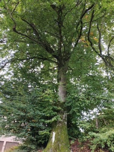 Projet : l'automne